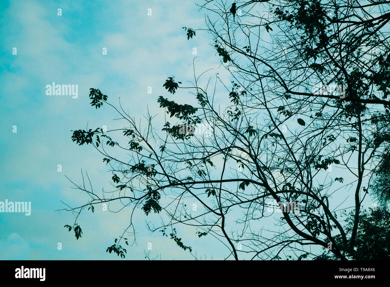 fallen leaves tree lonliness feeling with blue nature sky in autumn season change background Stock Photo