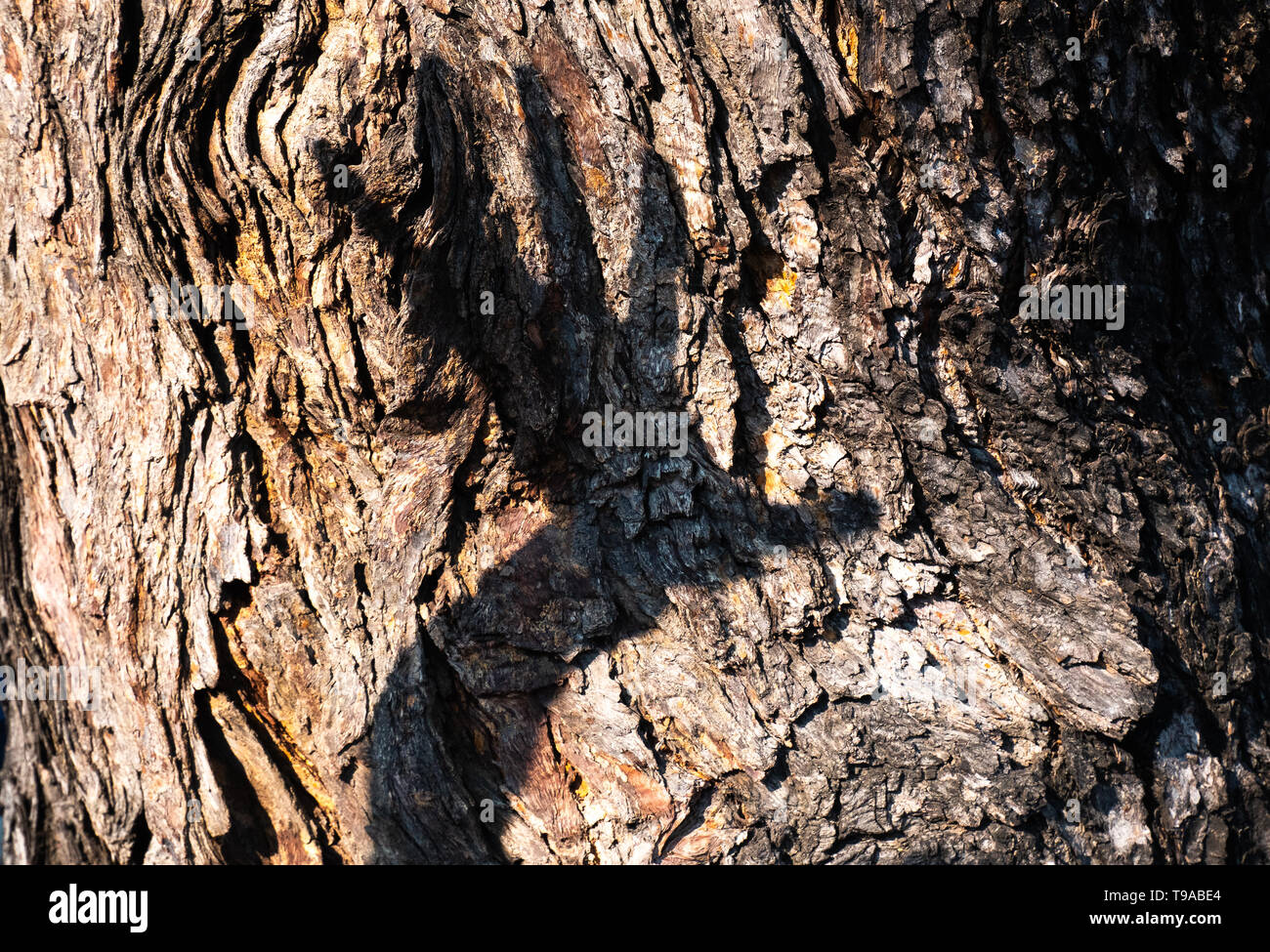 a tree texture close up  with the other hand background. Concept natural is easily destroyed because of man. - Stock Image