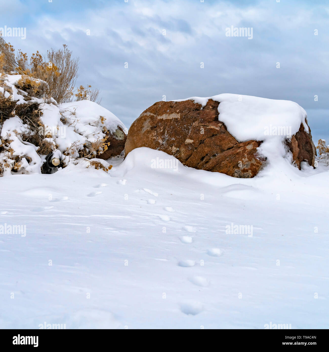 Clear Square Animal tracks on snow covered ground viewed on a frosty winter day - Stock Image