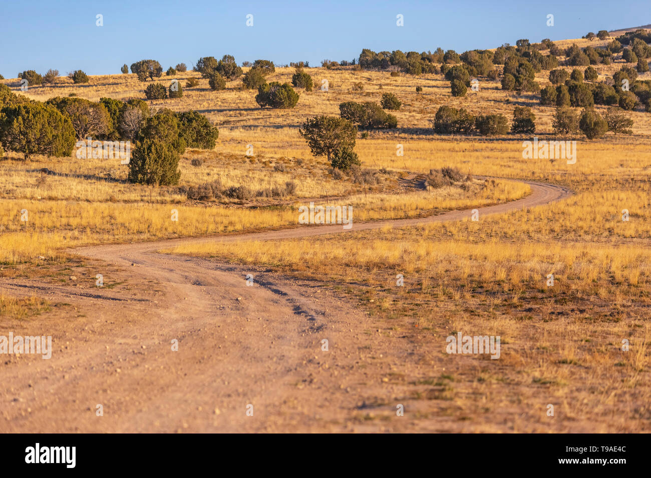 Unpaved trail winding through a vast grassy terrain viewed on a sunny day - Stock Image