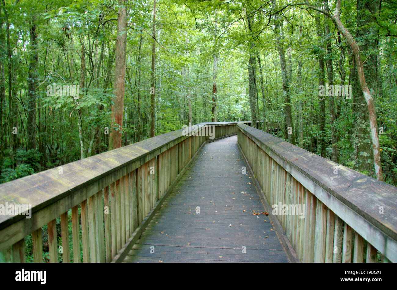 An elevated path over a swamp at Tickfaw State Park, located 7 mi (11 km) west of Springfield, in Livingston Parish, Louisiana, USA. - Stock Image
