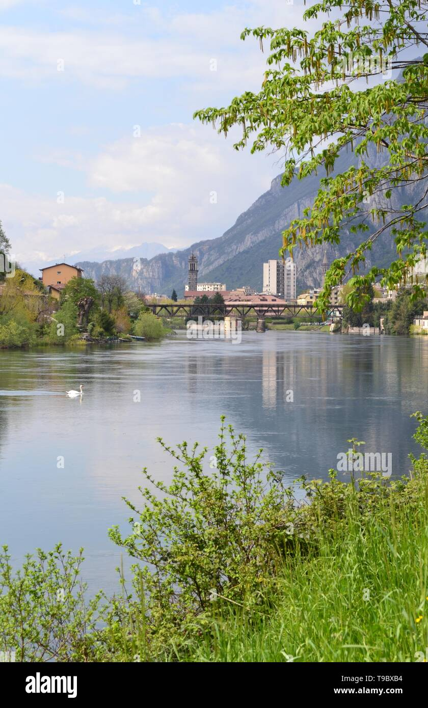 Beautiful spring view to the Adda river, flowing from the lake Como, the town of Lecco, nature and two white swan swimming. Stock Photo