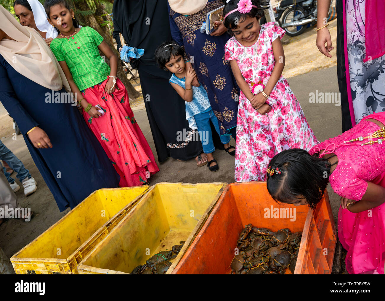 Horizontal view of children squirming at the fish market in Fort Kochi, India. Stock Photo