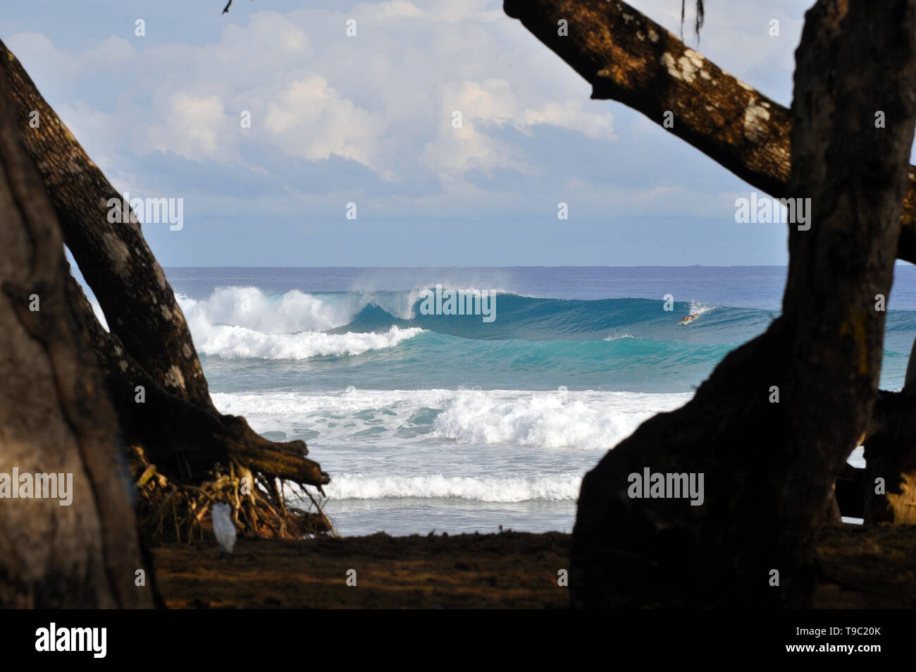 Best surf spot in the north coast of the Dominican Republic Stock Photo