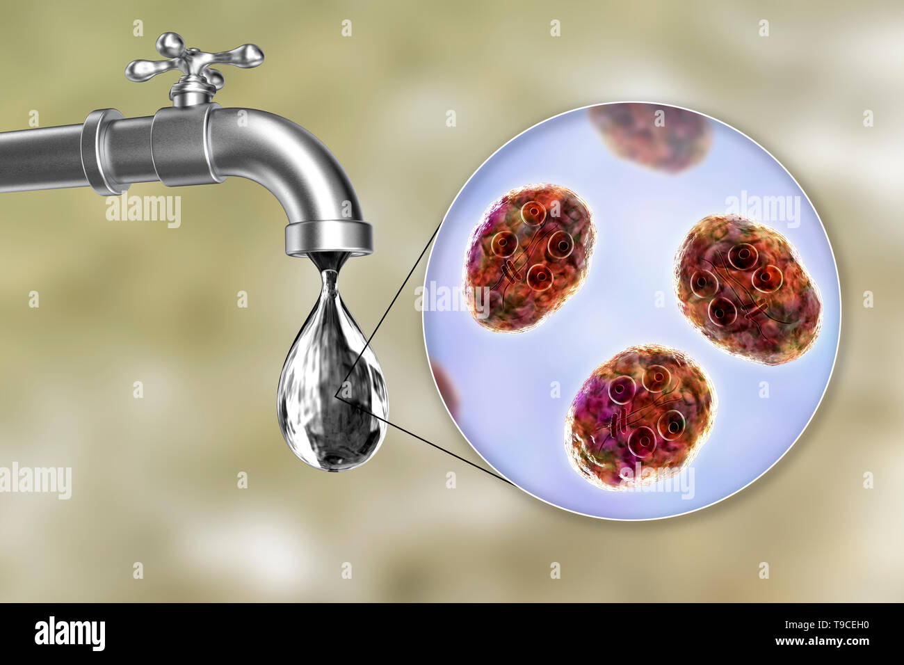 Safety of drinking water. Conceptual computer illustration showing cysts of Giardia intestinalis parasite in a drop of water. - Stock Image