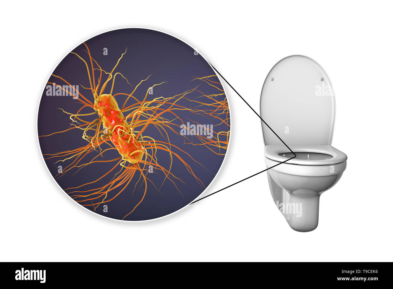 Toilet microbes, conceptual illustration - Stock Image