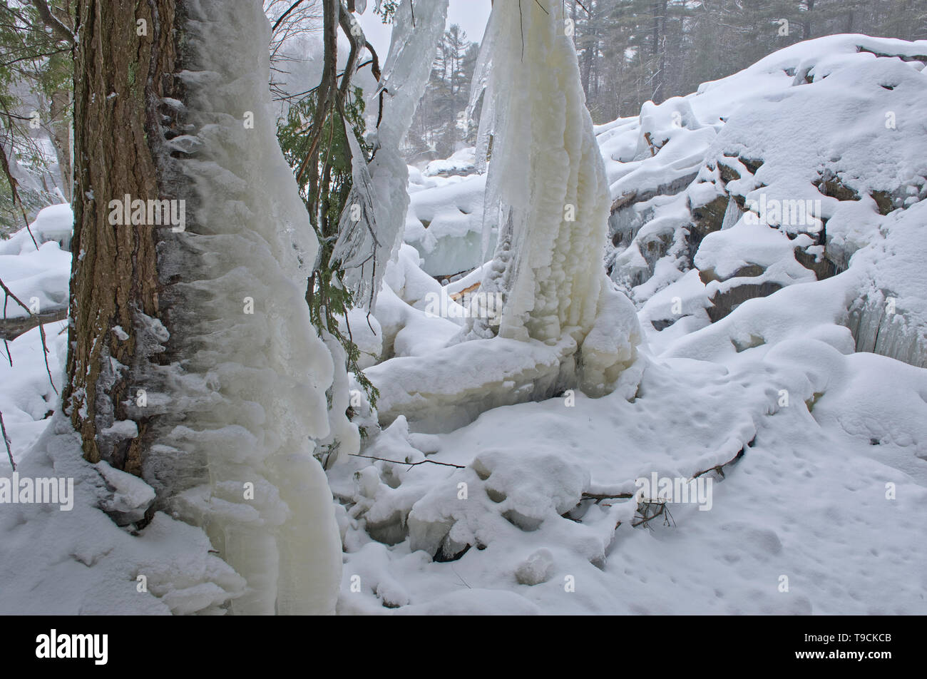 Ice on trees and The North Branch of the Muskoka River at Wilson's Falls in winter. Muskoka Country. Bracebridge Ontario Canada - Stock Image