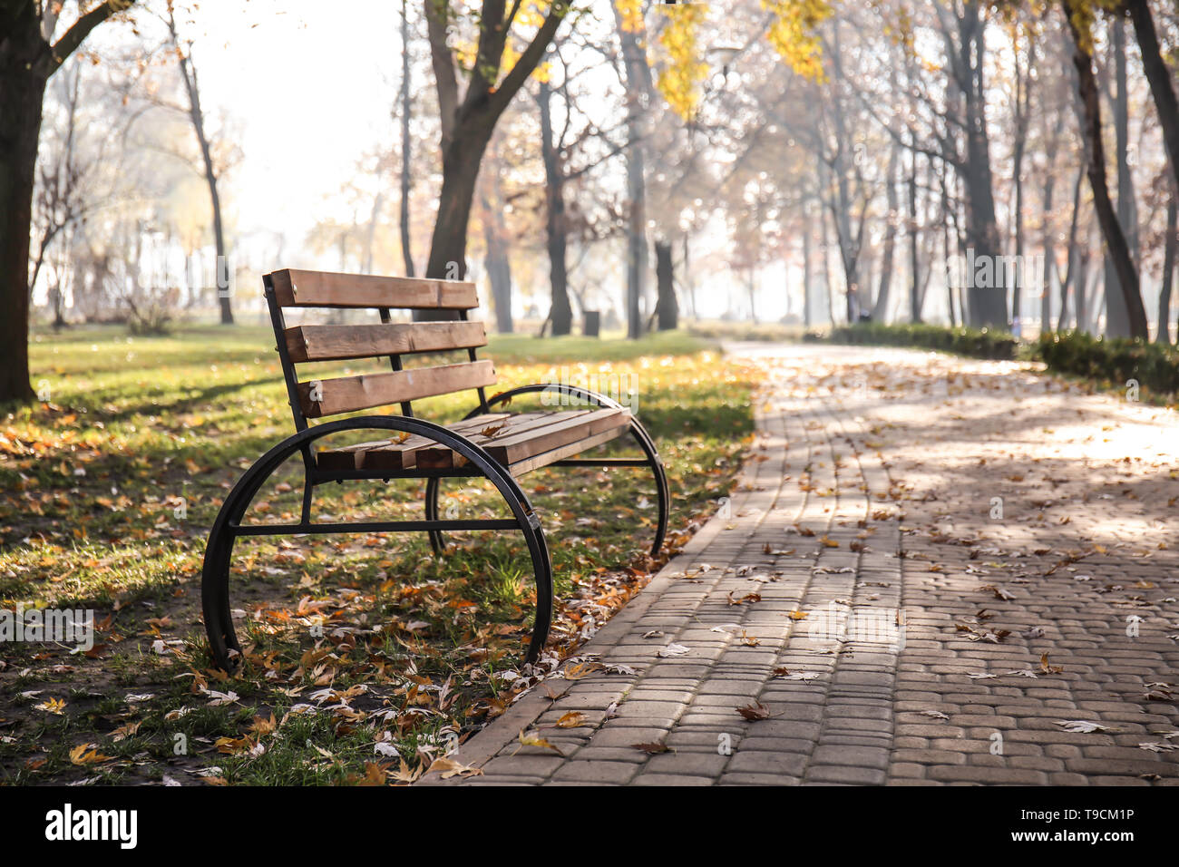 Wooden Bench In Autumn Park Stock Photo 246756210 Alamy