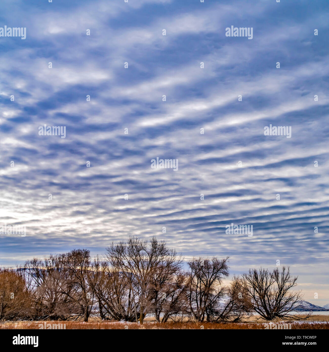Clear Square Defocused view of a dramatic blue sky filled with white puffy clouds - Stock Image