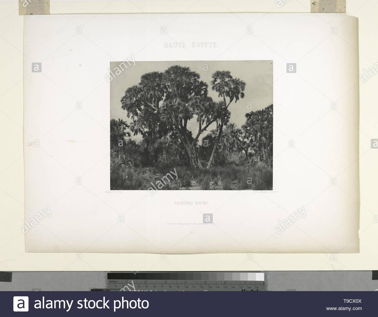 ImprimeriePhotographiquedeBlanquart-Evrard-Haute Égypte  Palmiers doums - Stock Image