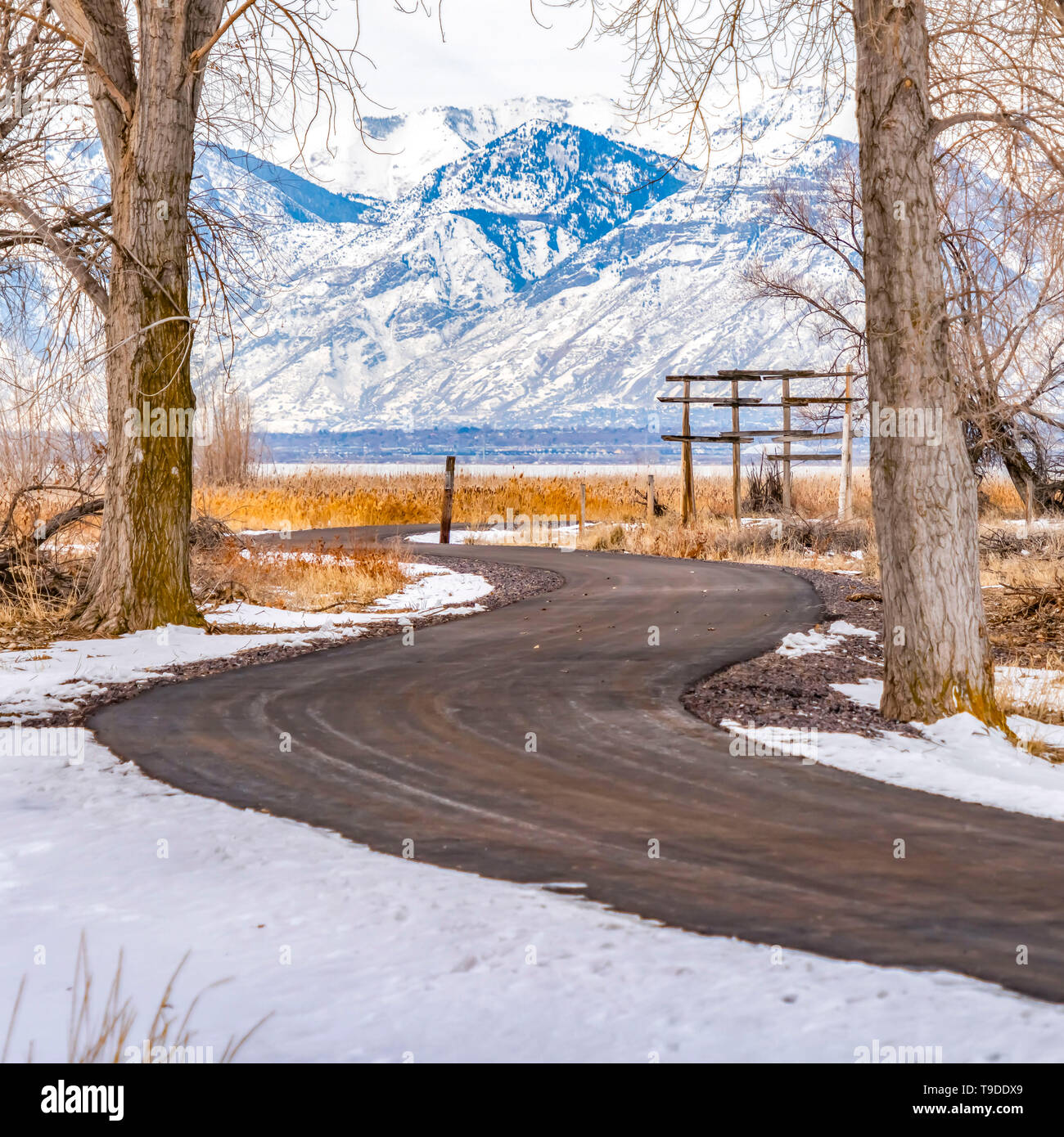 Clear Square Curving road on a snowy terrain with tall leafless hibernating trees in winter - Stock Image
