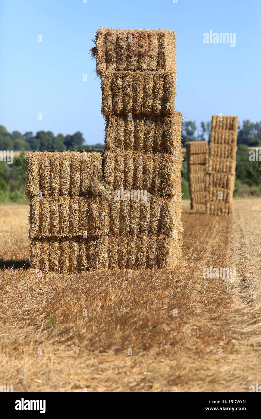 Ballots de paille. Coulommes. / Straw bales. Coulommes. - Stock Image