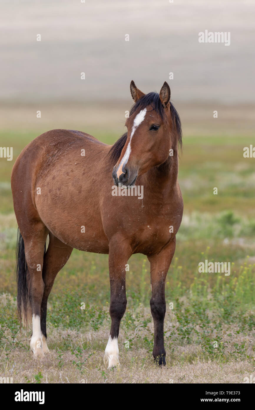 Beautiful Wild Horses High Resolution Stock Photography And Images Alamy