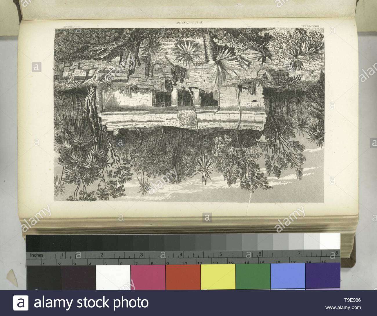 Stephens,JohnLloyd,1805-1852-Tuloom   [Rear view of the abandoned building] - Stock Image