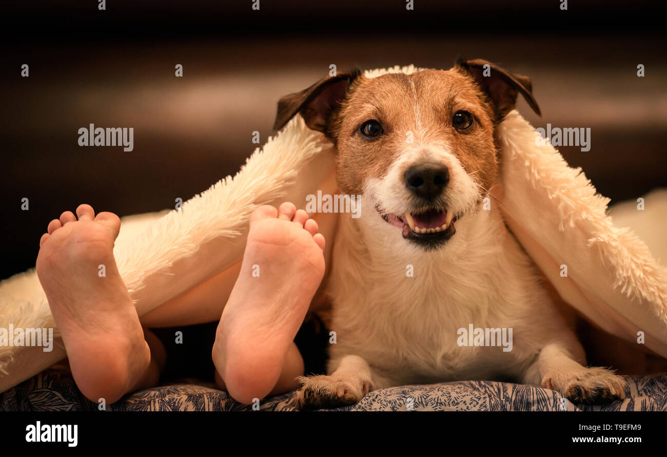 Cosy and humor scene with human kids foots and adorable dog under duvet on bed - Stock Image