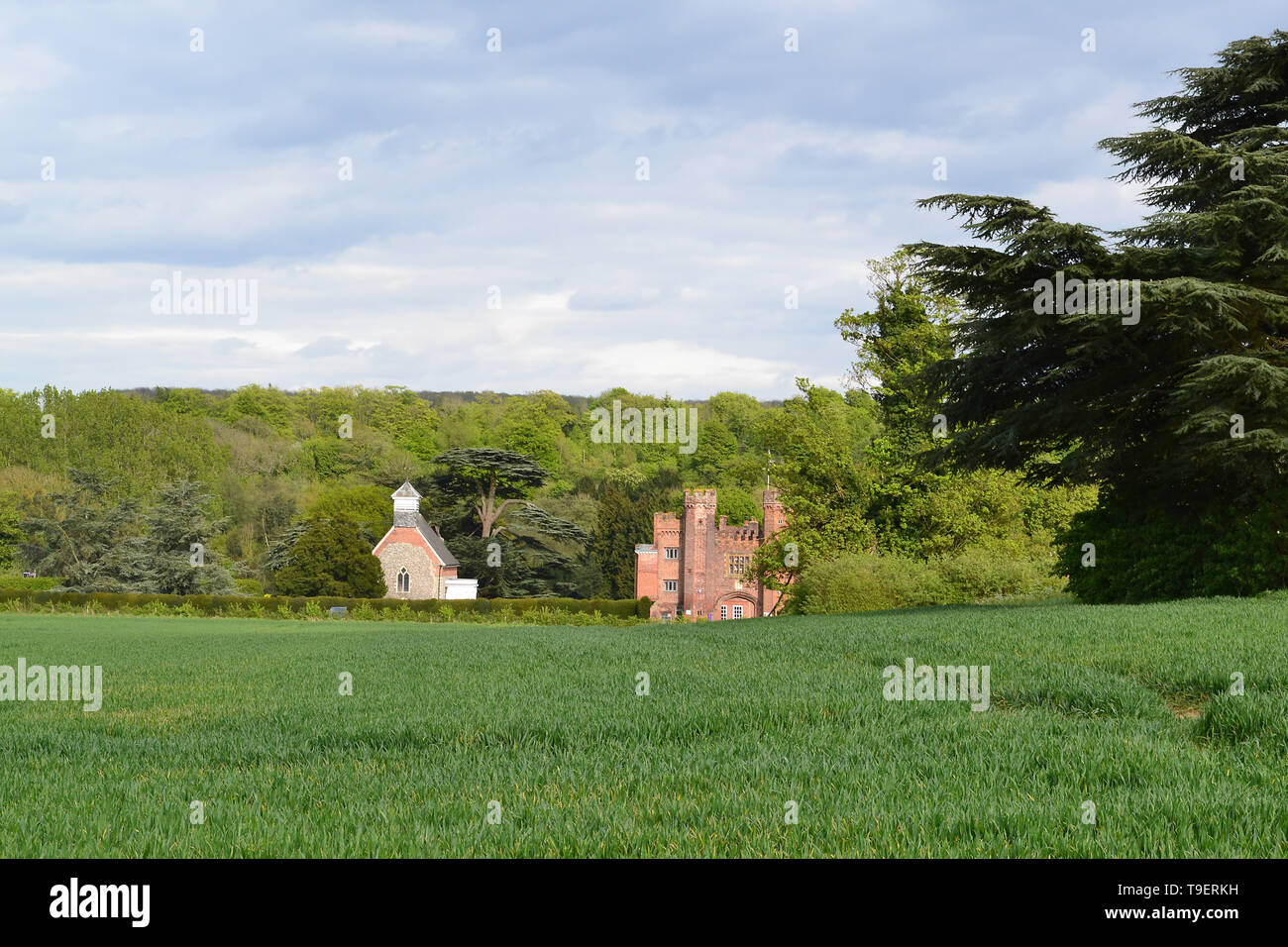 Hawthorn and cedar of Lebanon tree in Darent Valley by medieval Lullingstone Castle, Kent, a favourite of Henry VIII, on a bright but cloudy May day - Stock Image