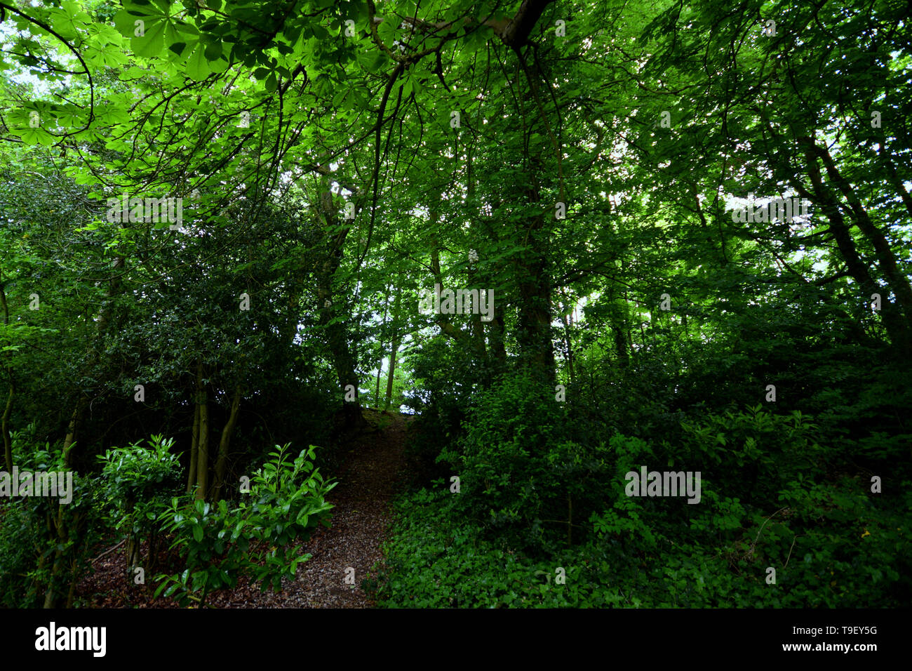 Forest ruins - Stock Image