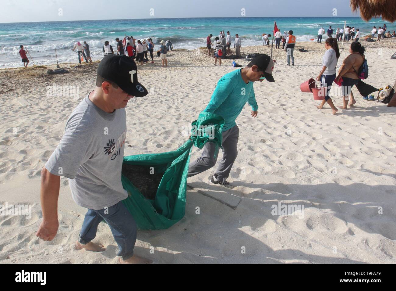 Volunteers clean the sargassum of the beaches of the paradisiacal