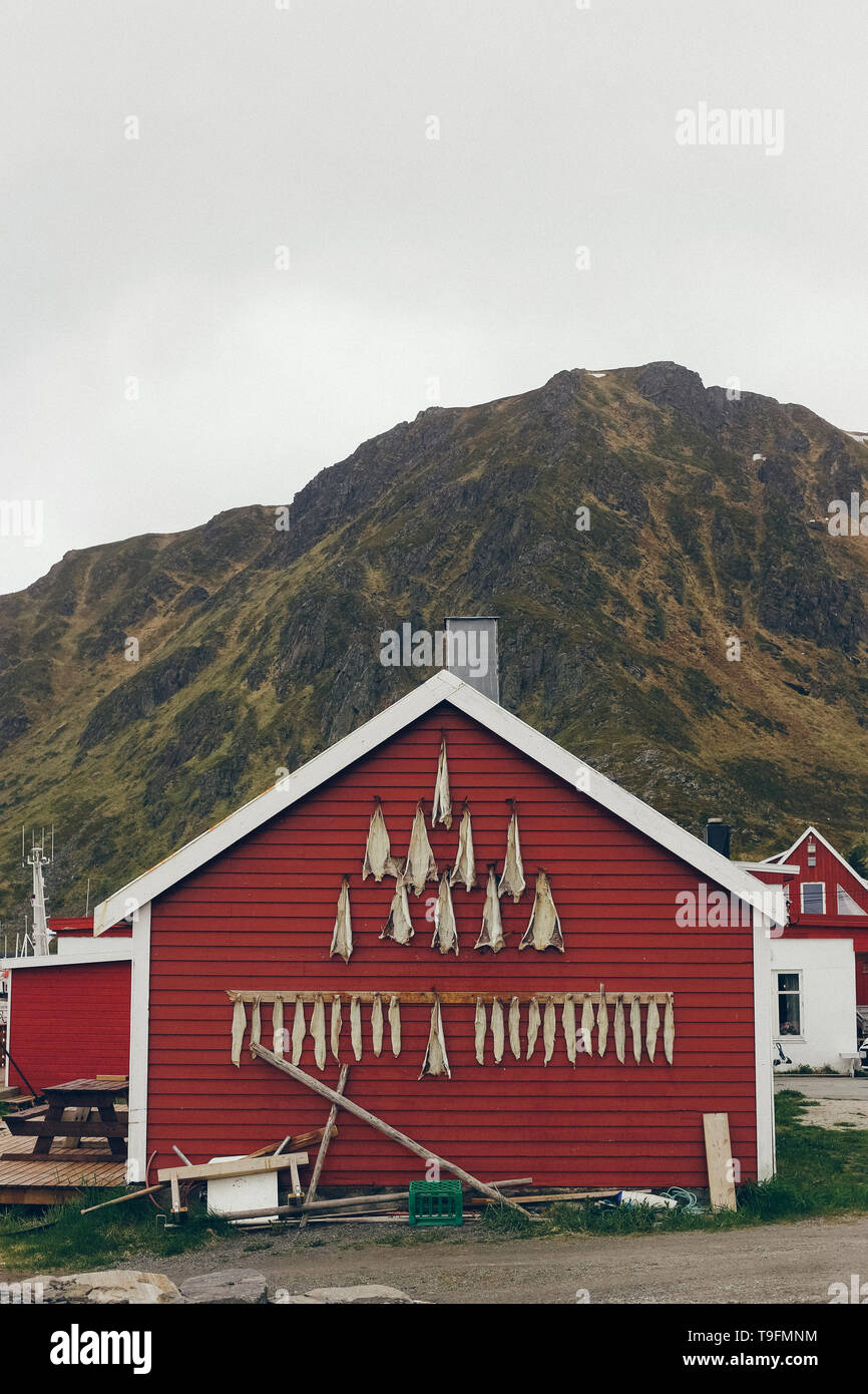 Nusfjord, Norway - May 28, 2015: Dried codfish hanging from the facade of a house in a fishing village. - Stock Image