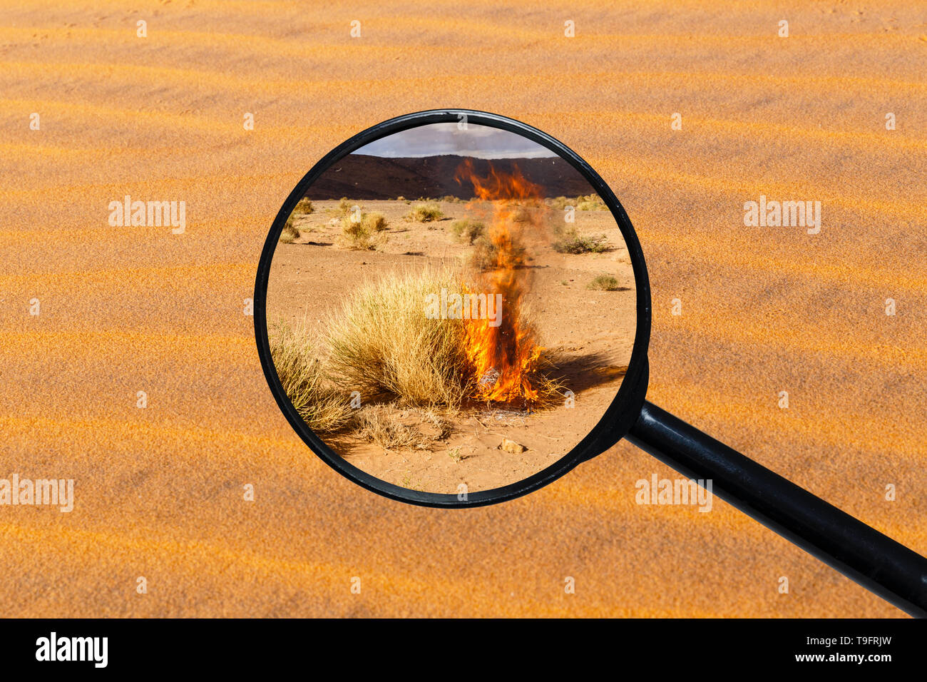Dry burning bush in the Sahara desert, view through a magnifying glass against the background of sand - Stock Image