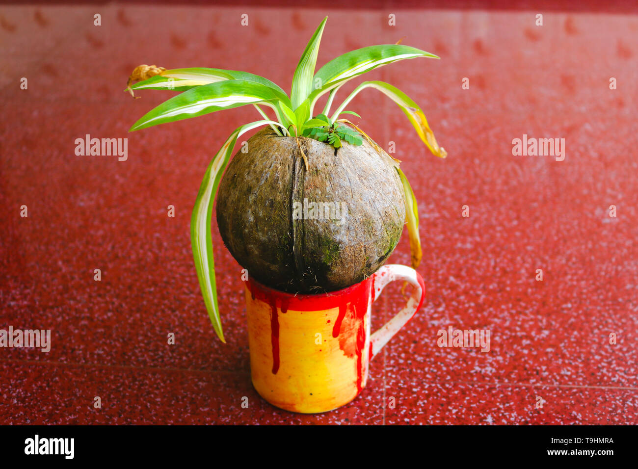 Plant on a cup Stock Photo