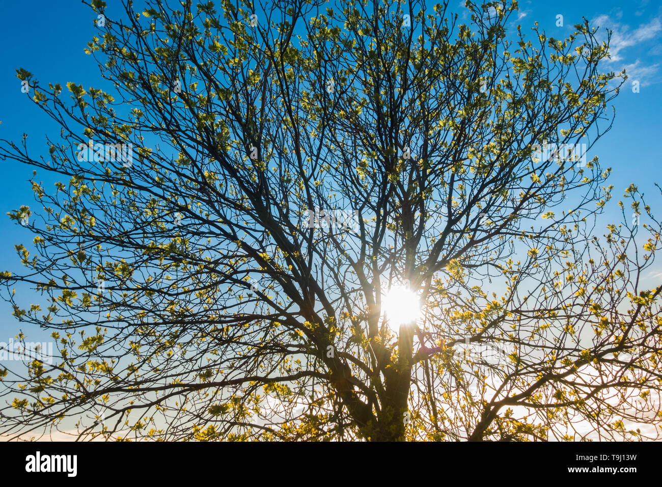 Seaton Carew, County Durham, UK. 19th May 2019. UK weather: early morning sun burns off a thin layer of cloud on a glorious Sunday morning at Seaton Carew on the north east coast of England. Credit: Alan Dawson/Alamy Live News Stock Photo