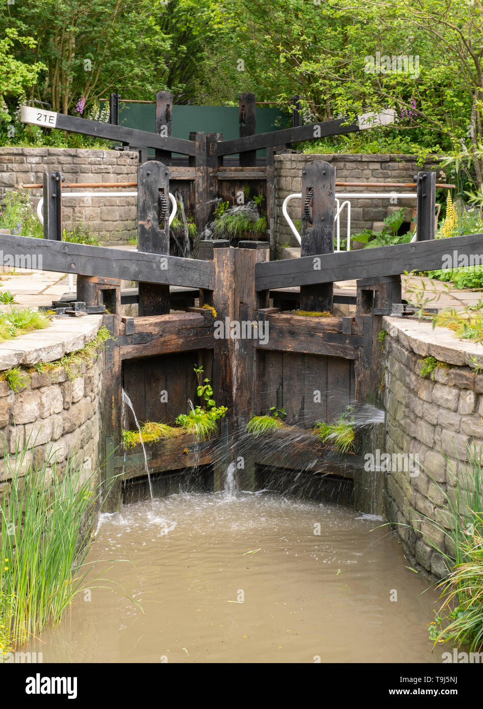 Royal Hospital Chelsea, London, UK. 19th May 2019. Chelsea Flower Show 2019 readies itself for judges before the public opening on 21st May with finishing touches to plant displays and gardens around the showground. Image: The Welcome to Yorkshire Garden designed by Mark Gregory. Credit: Malcolm Park/Alamy Live News. - Stock Image