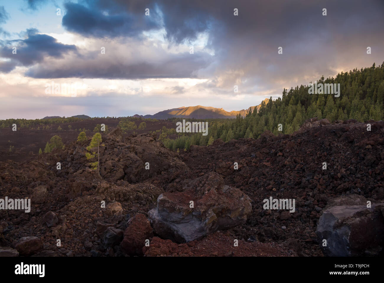 Road in Teide National Park, lined by hills with forests, created mostly by pines. Morning colorful sky with clouds. Tenerife, Canary Islands, Spain. - Stock Image