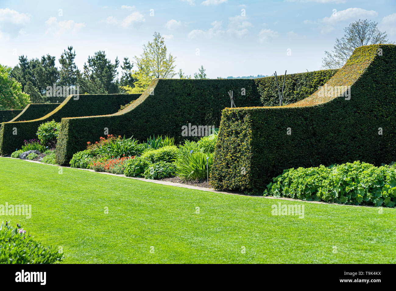 The herbaceous border at RHS Hyde Hall, with tightly trimmed hedging. - Stock Image