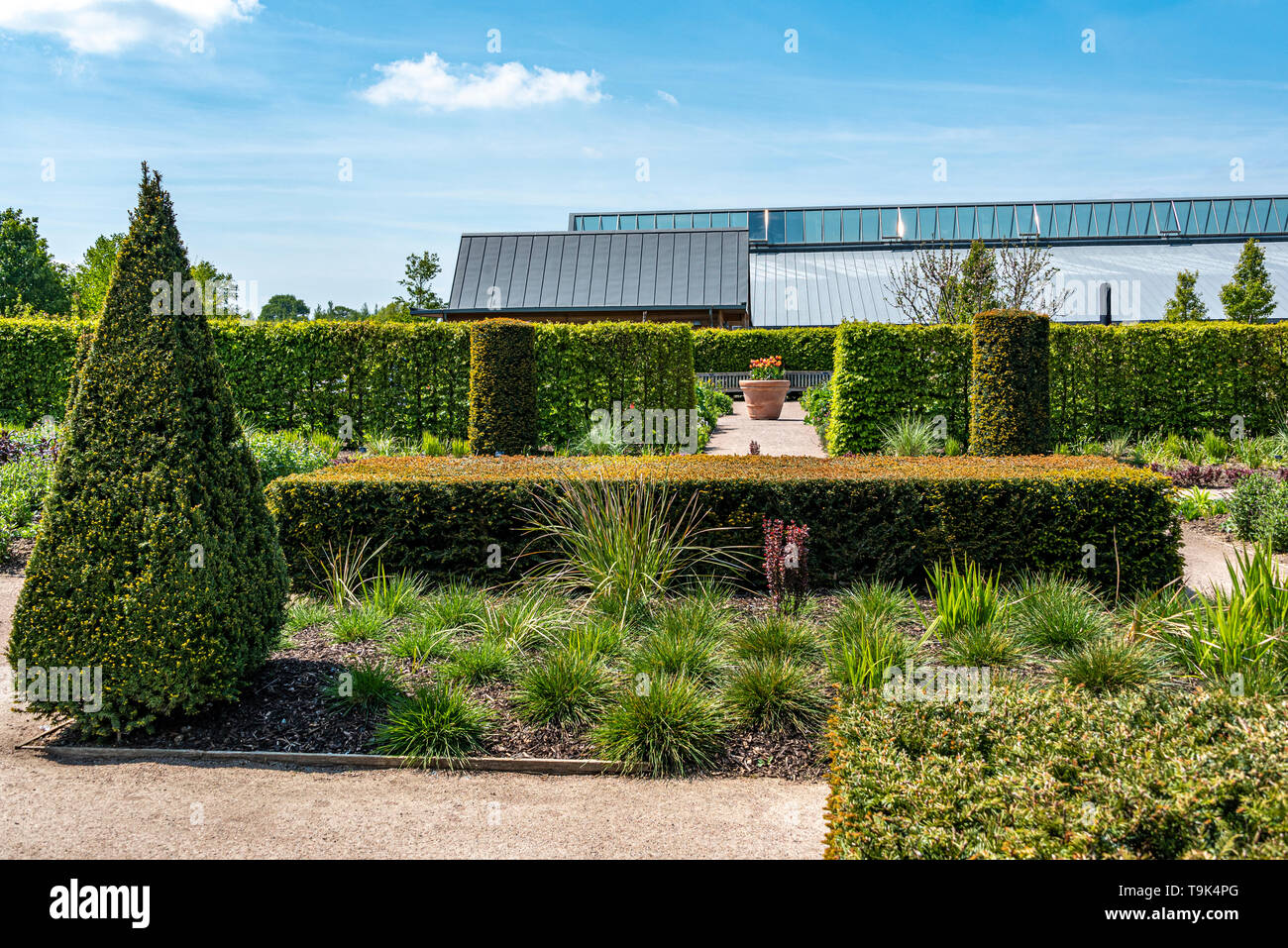 The modern country garden at RHS Hyde Hall  in Essex.Displaying some formal topiary and hedging. - Stock Image