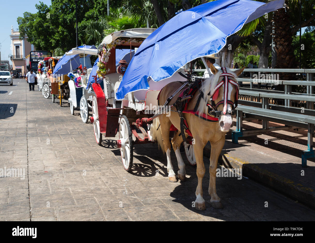 Mexico tourism - horses and carriages waiting for tourists; Plaza de Independencia, Merida Yucatan Mexico Latin America - Stock Image