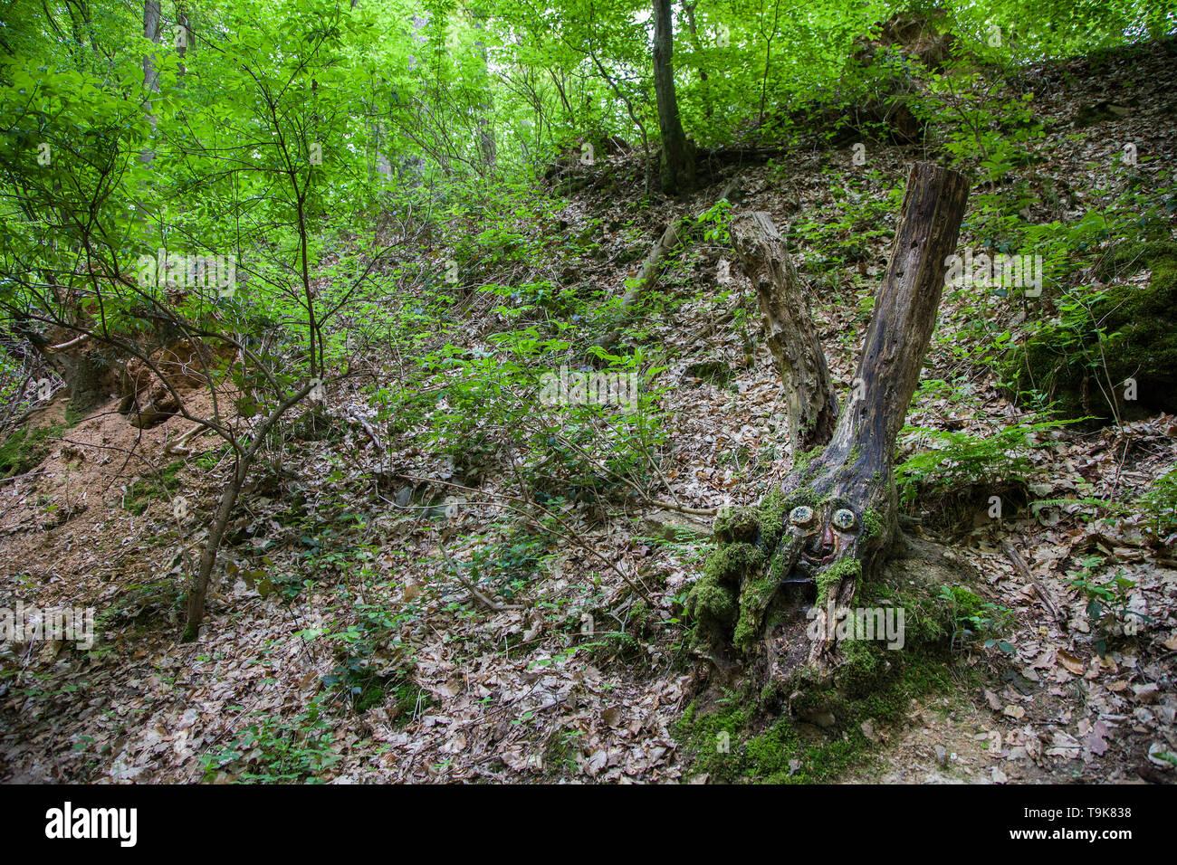 Carved face in a tree stump, Steckeschlääfer-Klamm, Binger forest, Bingen on the Rhine, Rhineland-Palatinate, Germany - Stock Image
