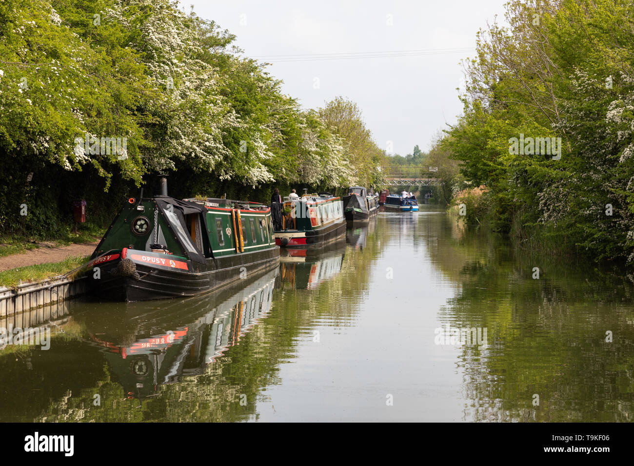 Narrowboats moored along the Grand Union Canal in readiness for the Crick Boat Show, billed as Britain's biggest inland waterways festival. - Stock Image