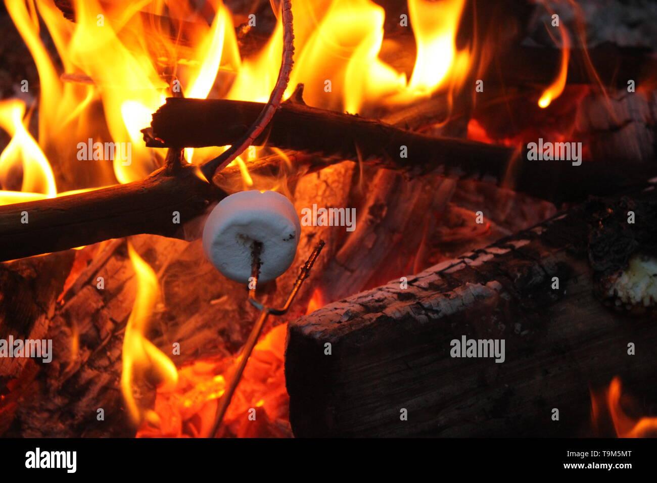 Roasting marshmallows for smores. - Stock Image