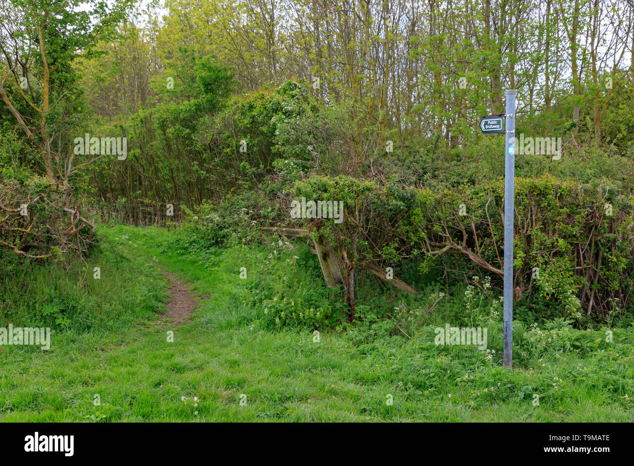 Footpath sign between hedges in Lincolnshire - Stock Image