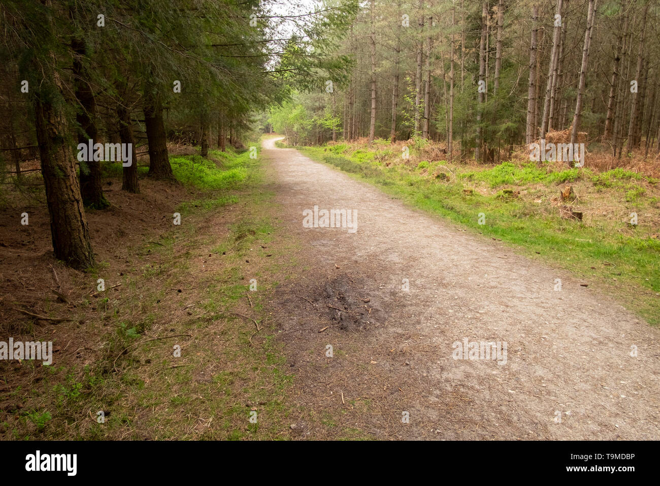 Track through the woods in the ancient New Forest, Hampshire, England, UK - Stock Image