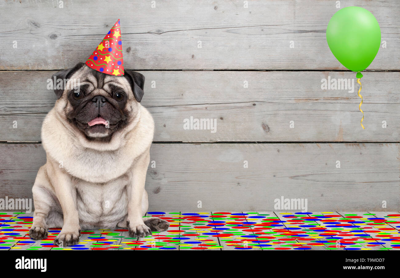 frolic smiling birthday party pug dog, with confetti and balloon, sitting down celebrating, on old wooden backgrond Stock Photo