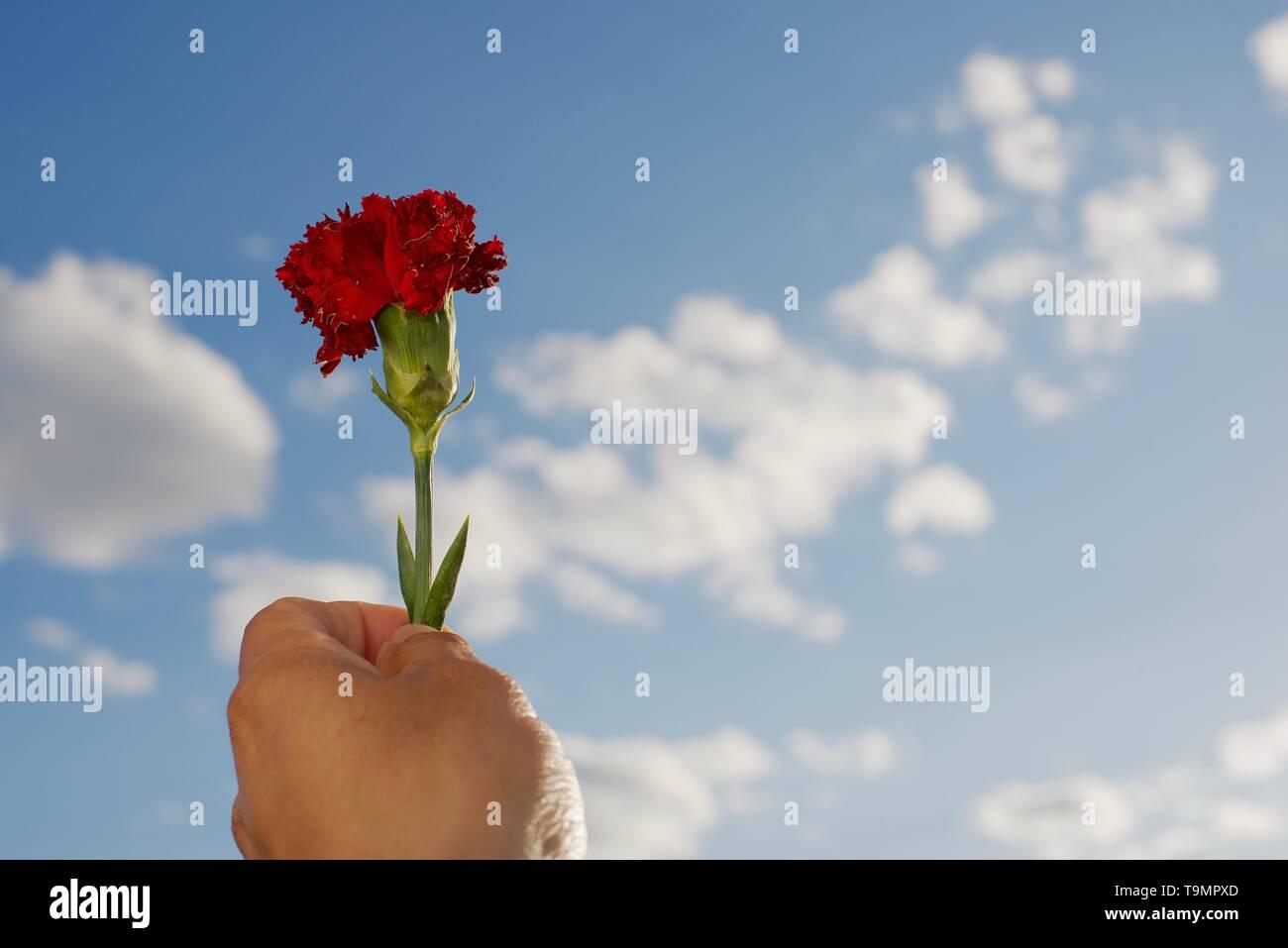 mis pensamientos hacia ti/ my thoughts towards you. - Stock Image