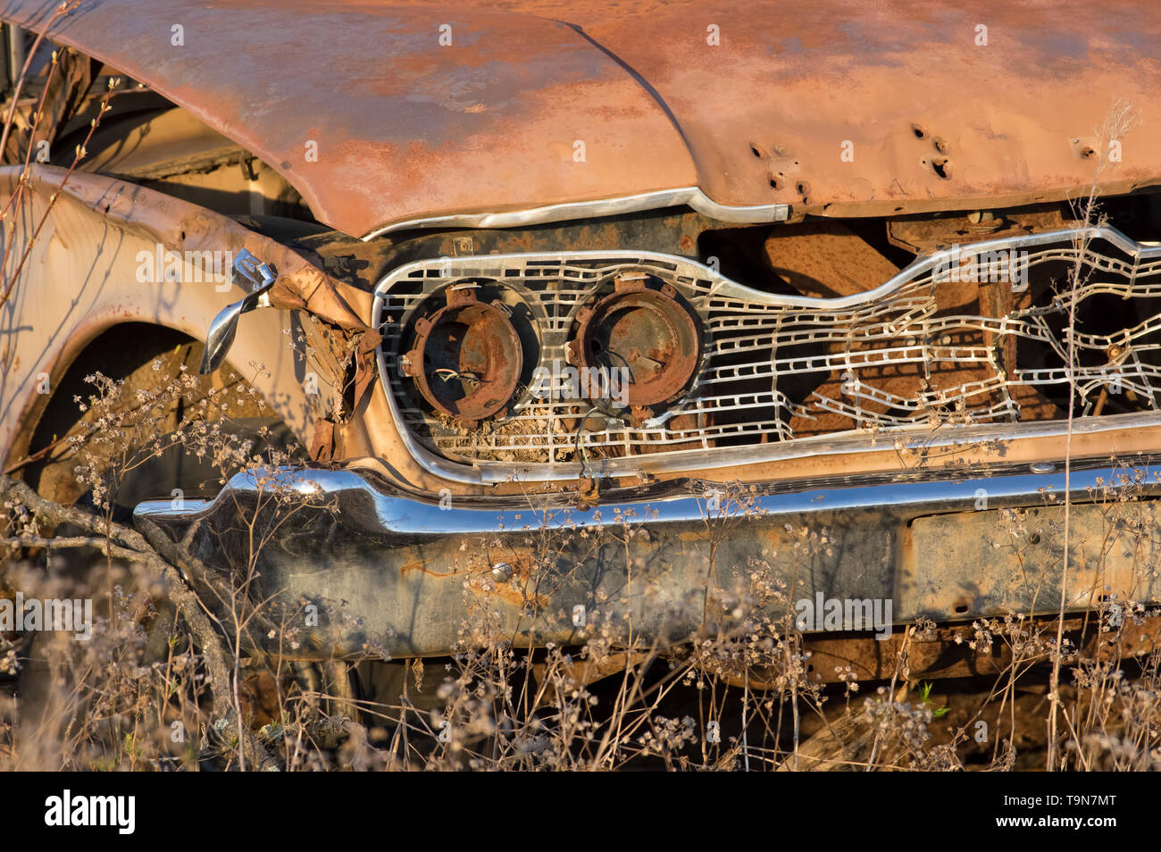 Old vintage rusted out car's headlight / grill area - left in the middle of no where forest / field in rural Wisconsin - golden light at sunset - Stock Image