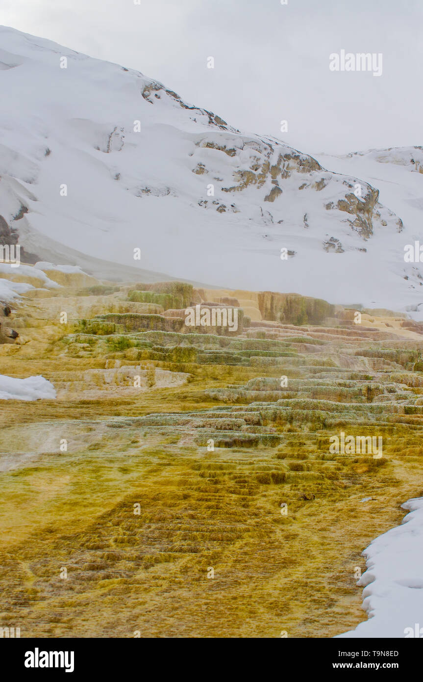 Mammoth hot springs terraces in the wintertime at Yellowstone National Park - beautiful steaming colorful travertine limestone terraces - Stock Image