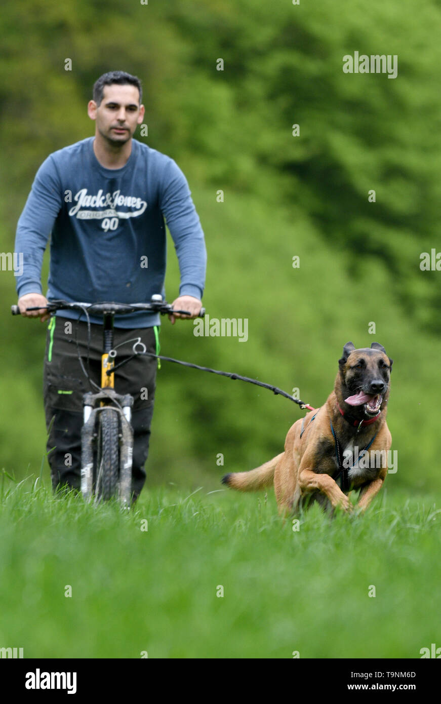 Trier, Germany. 10th May, 2019. Mario Reitz lets himself be pulled on a 'Dogscooter' by his Belgian shepherd Kira. At speeds of up to 40 kilometres per hour, the team races along field paths or meadows. Credit: Harald Tittel/dpa/Alamy Live News - Stock Image