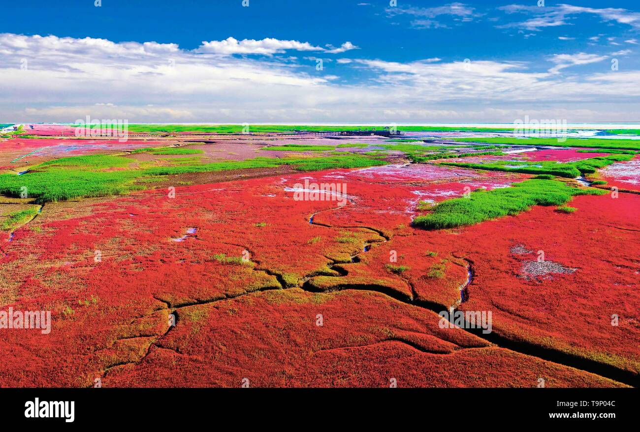 (190520) -- BEIJING, May 20, 2019 (Xinhua) -- Aerial photo taken on June 19, 2018 shows the Honghaitan Red Beach scenic area in Panjin, northeast China's Liaoning Province. Liaoning Province is located in the southern part of Northeast China, with the Bohai Sea and the Yellow Sea lying to its south. Over the years, the provincial government has prioritized ecological development and set environmental improvement at the core of its agenda. The province's ecological conditions have been improving thanks to systematic conservation of the natural environment, overall management of the rural enviro - Stock Image