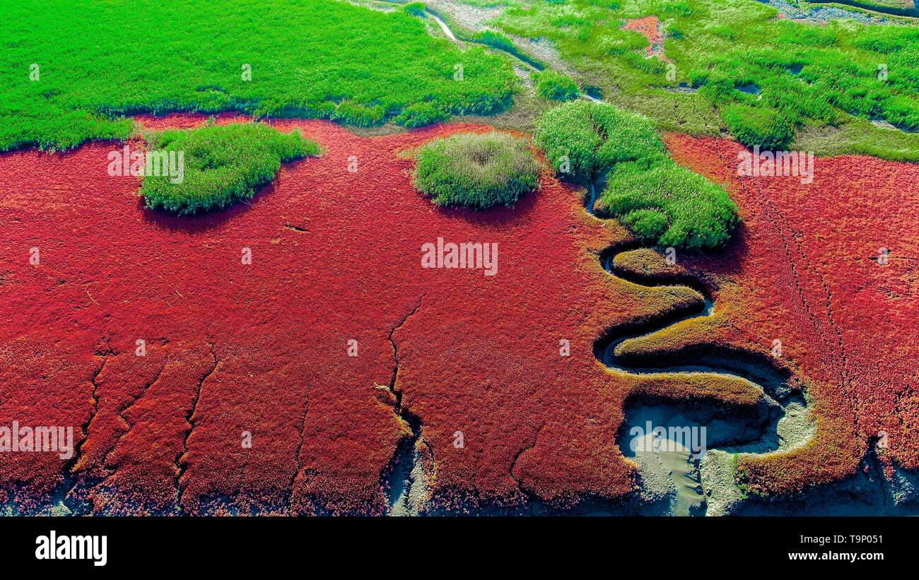 (190520) -- BEIJING, May 20, 2019 (Xinhua) -- Aerial photo taken on July 3, 2018 shows the Honghaitan Red Beach scenic area in Panjin, northeast China's Liaoning Province. Liaoning Province is located in the southern part of Northeast China, with the Bohai Sea and the Yellow Sea lying to its south. Over the years, the provincial government has prioritized ecological development and set environmental improvement at the core of its agenda. The province's ecological conditions have been improving thanks to systematic conservation of the natural environment, overall management of the rural environ - Stock Image