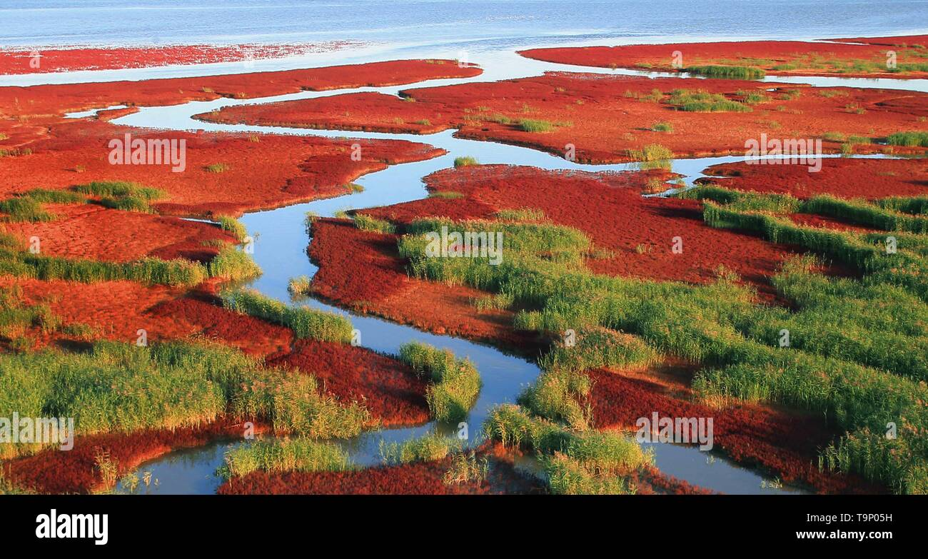 (190520) -- BEIJING, May 20, 2019 (Xinhua) -- Aerial photo taken on Aug. 2, 2017 shows the Honghaitan Red Beach scenic area in Panjin, northeast China's Liaoning Province. Liaoning Province is located in the southern part of Northeast China, with the Bohai Sea and the Yellow Sea lying to its south. Over the years, the provincial government has prioritized ecological development and set environmental improvement at the core of its agenda. The province's ecological conditions have been improving thanks to systematic conservation of the natural environment, overall management of the rural environ - Stock Image