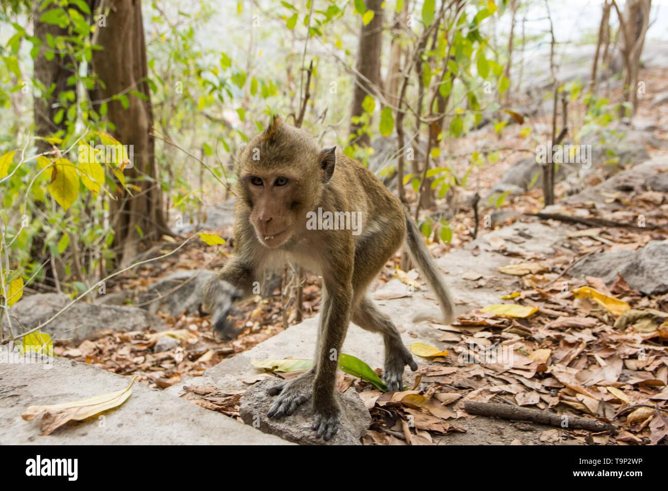 Monkey in the wild - Stock Image