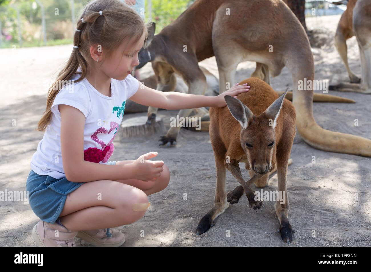 Girl feeds a kangaroo at the Australian Zoo Gan Guru in Kibbutz Nir David, in Israel - Stock Image