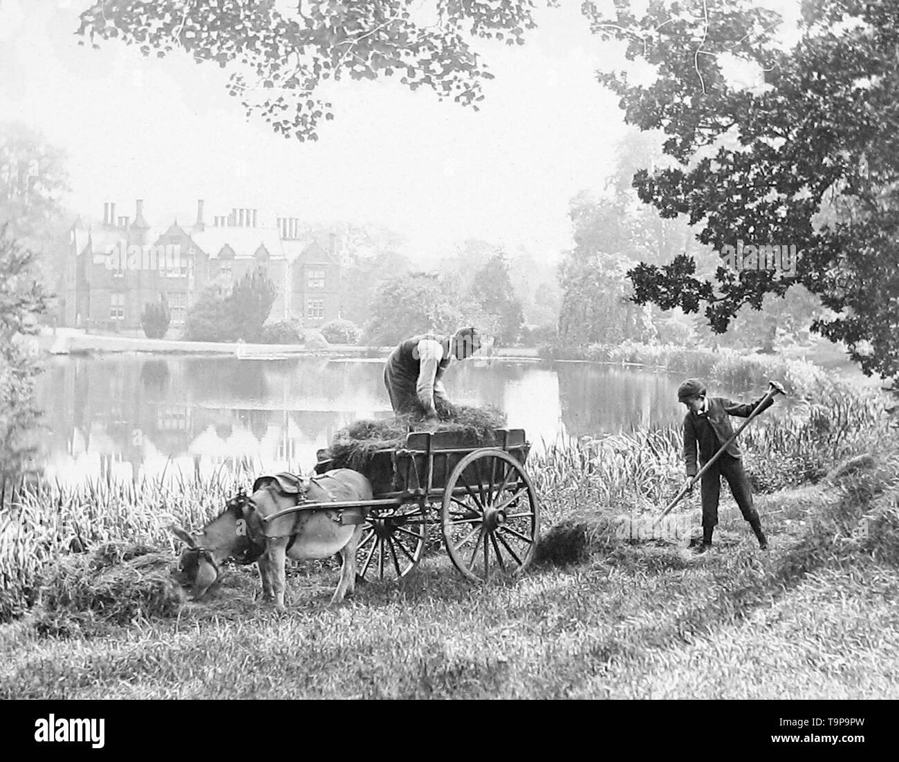 Haymaking on the banks of the River Thames - Stock Image