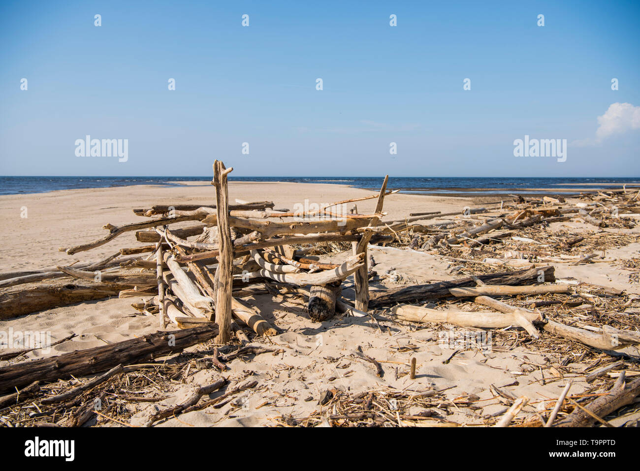Driftwood log on sea coast. Sunny summer day. Latvia. River called Gauja - Stock Image