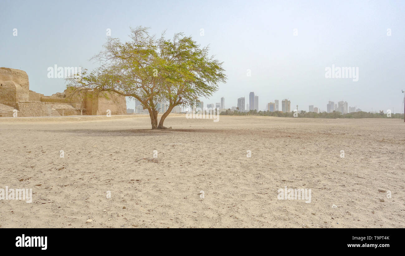 One tree, the Al Qalat Fort and the Manama skyline, Qal'at al-Bahrain - Stock Image