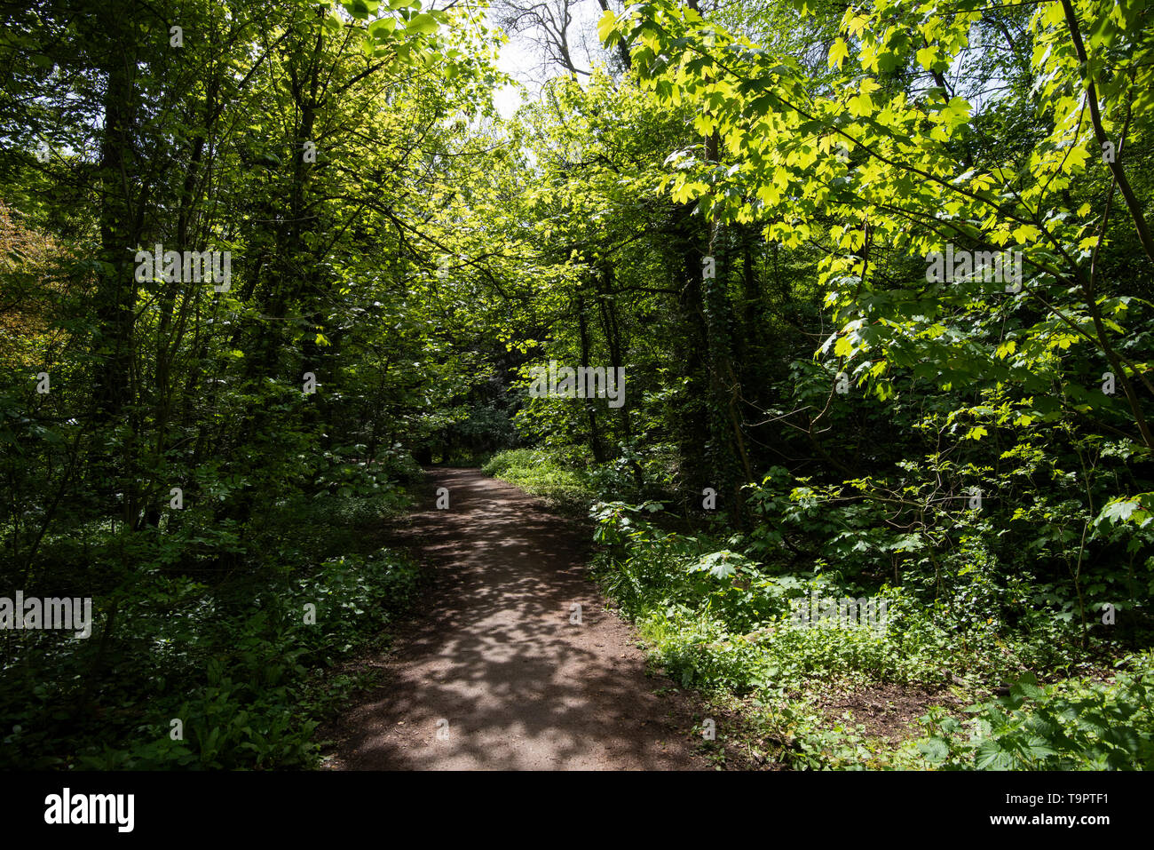 The Grace Dieu Trail, Thringstone Leicestershire England UK - Stock Image